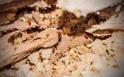 Four Signs of Termites in the Home